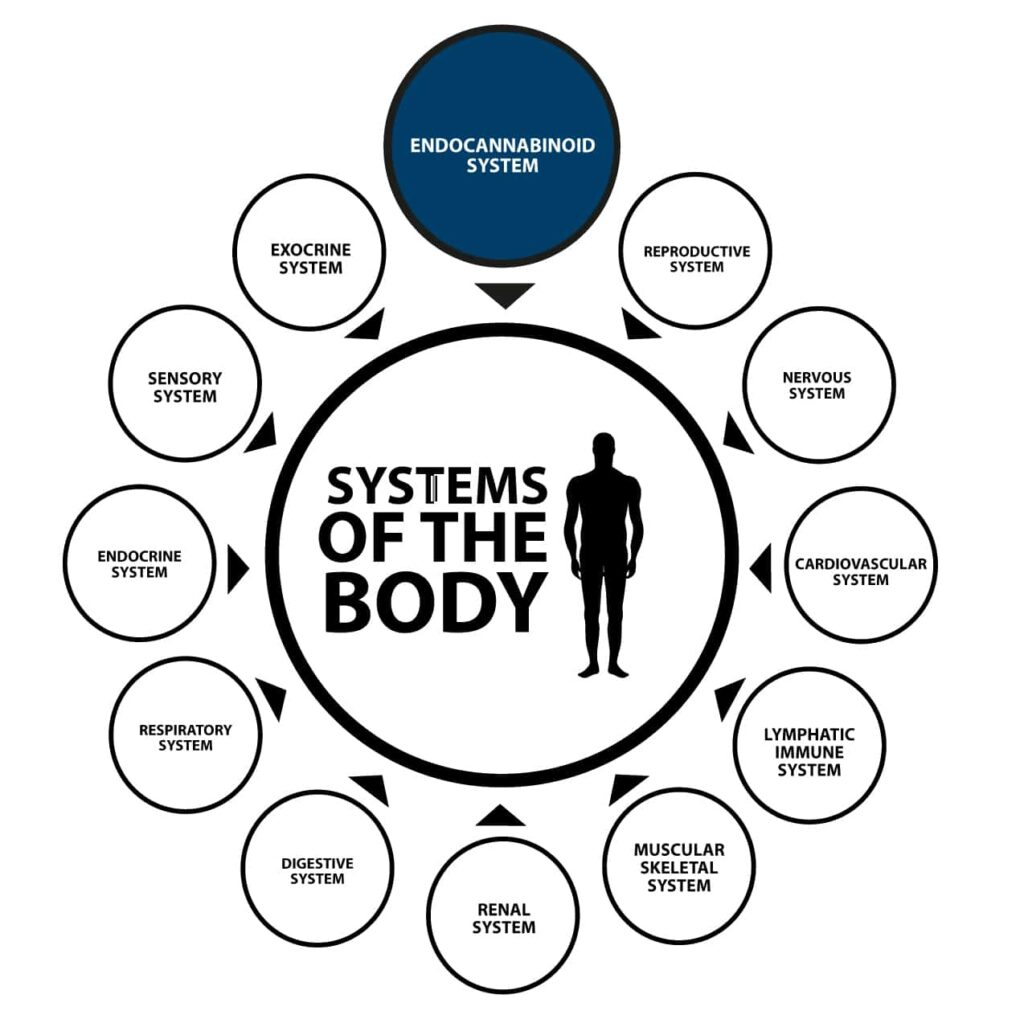 systems of the body diagram
