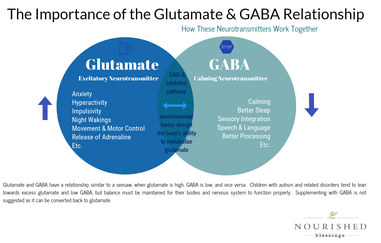 glutamate and gaba - the importance of their relationship via nourished blessings blog