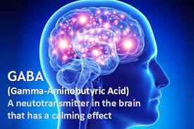 GABA effect in brain https://www.google.com/url?sa=i&url=https%3A%2F%2Fgabatea.asia%2Fwhat-is-gaba-tea-why-is-it-so-good-for-you%2F&psig=AOvVaw2XlhXyVzmEcUphaM-spWph&ust=1578332418203000&source=images&cd=vfe&ved=0CAIQjRxqFwoTCLDoqPaA7eYCFQAAAAAdAAAAABAK