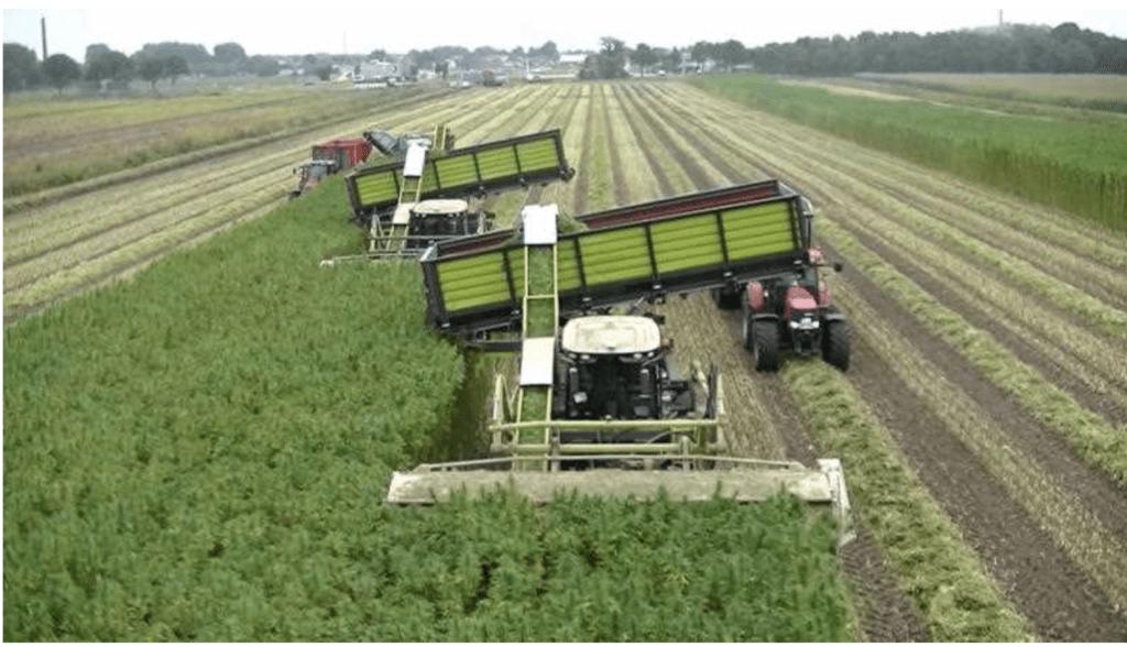industrial hemp combine harvest