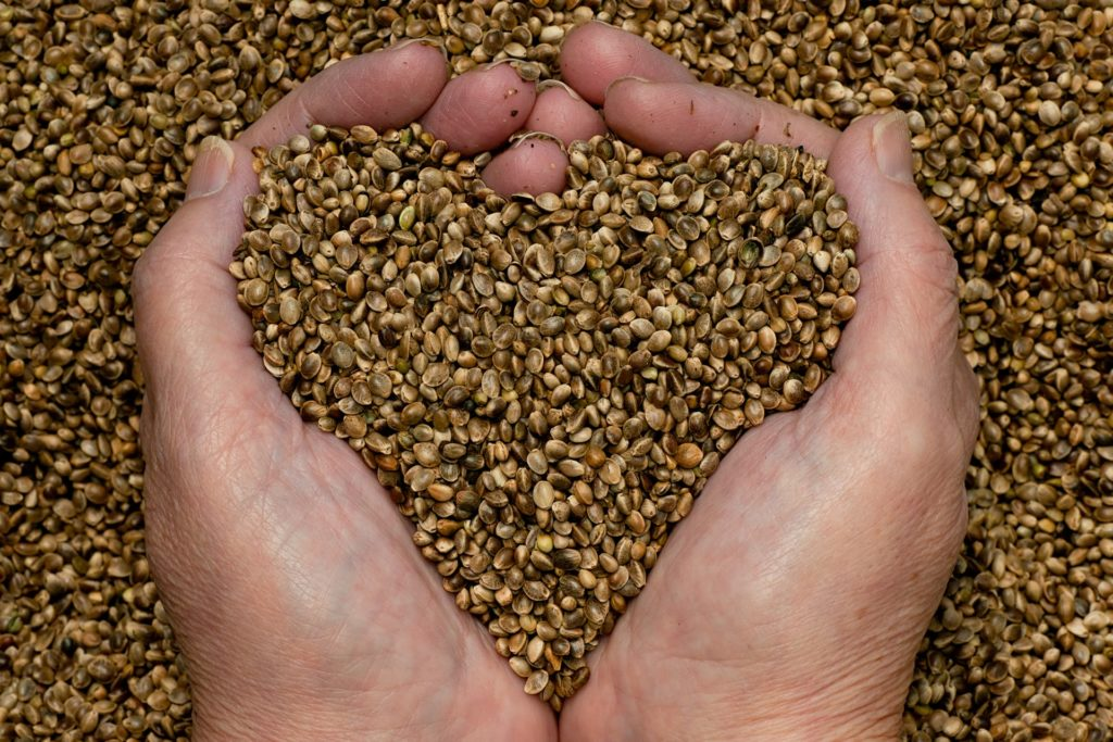 hemp seeds in a hand in the shape of a heart