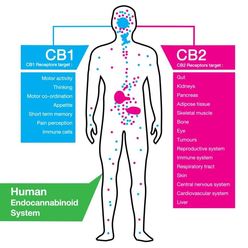 CBD ECS system